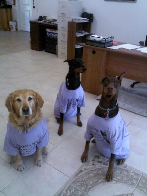 dogs_with_tshirts
